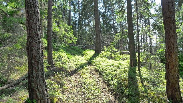 En skogsmästare arbetar med skogen